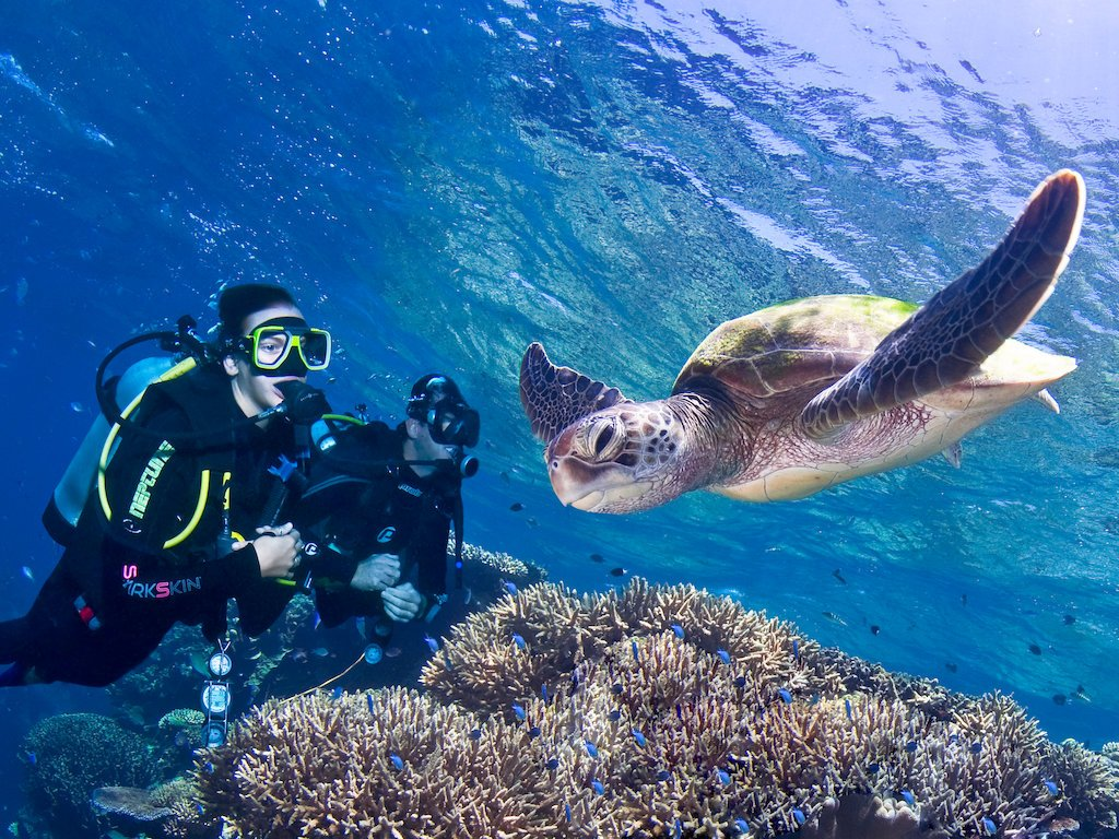 3 Day Great Barrier Reef liveaboard Dive Trip